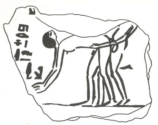 Egyptian Erotica - C